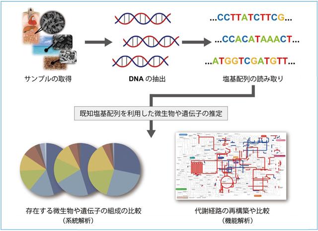 解析 メタゲノム メタゲノム解析によるヒト腸内フローラの全貌解明